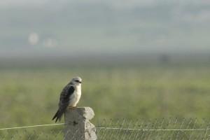 Observar pájaros es una actividad muy común en Túnez (Foto Flickr de Desert Night Sky)