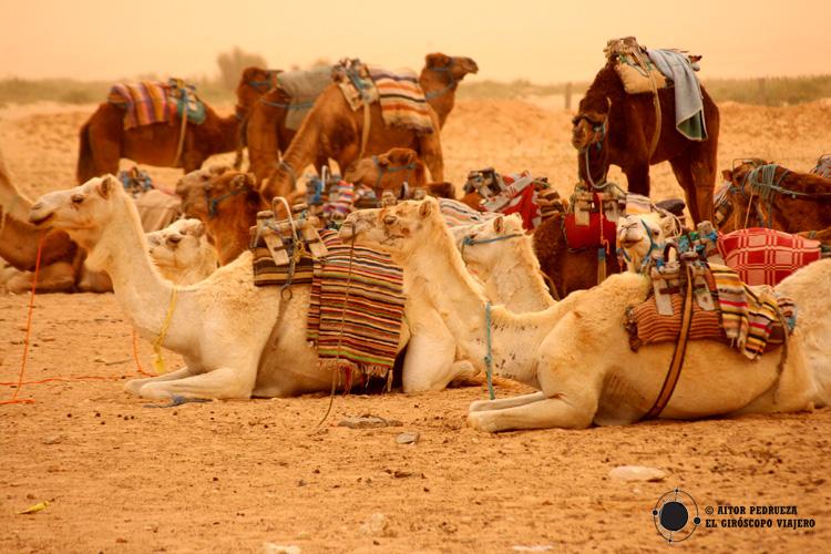 Estación de dromedarios desde donde parten las excursiones al Sáhara